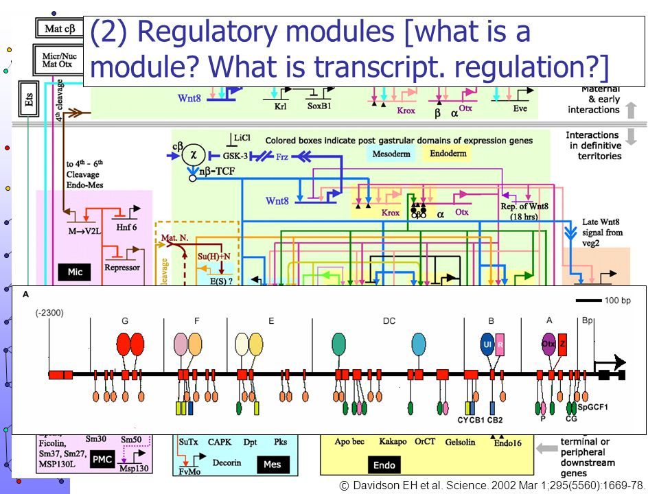 (2) Regulatory modules [what is a module. What is transcript